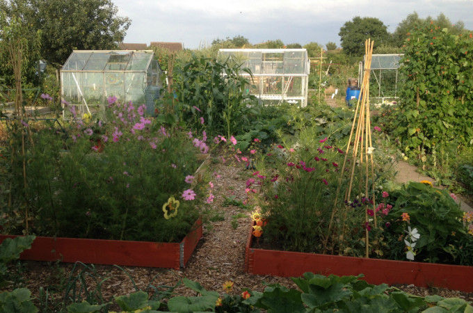 A family allotment adventure