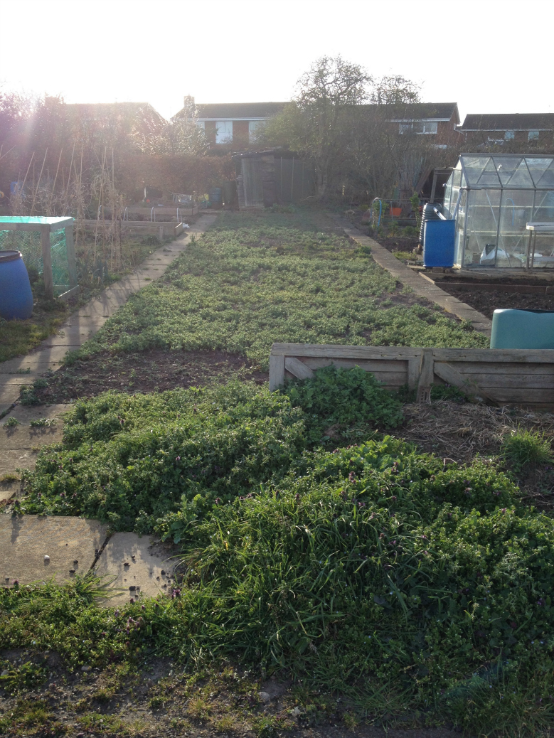 allotment weeds