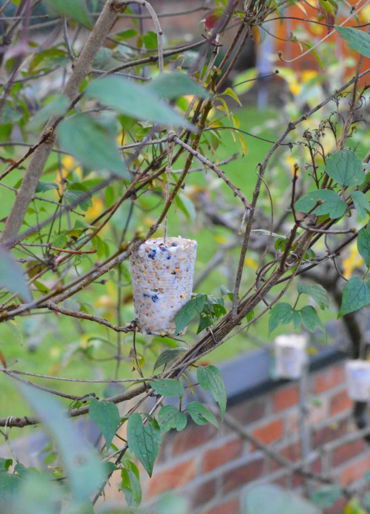 homemade bird feeders hanging in tree
