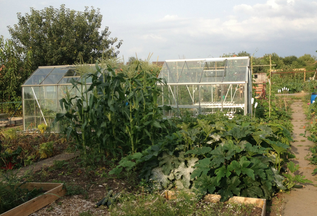 allotment greenhouse