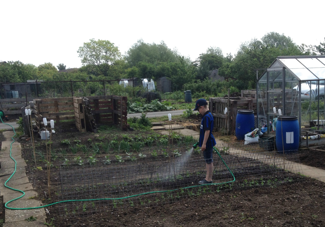 allotment watering