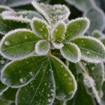 Hardly any time to spare for gardening. You need the ten minute gardener; check out these ten minute gardening jobs to tackle in early winter.