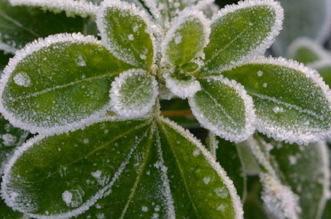 1. The 10-minute gardener: early winter gardening jobs