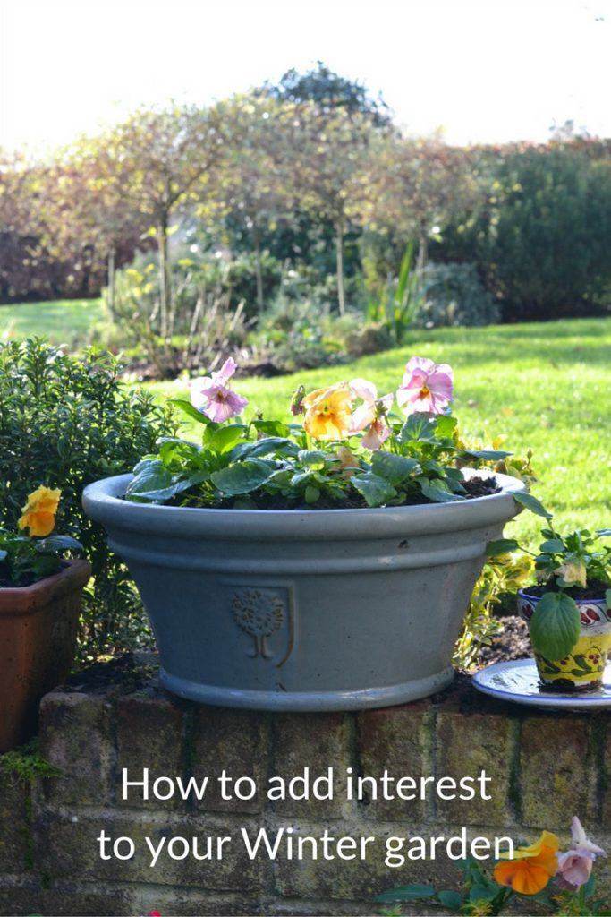 Add interest to your winter garden with these easy tips