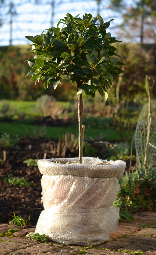 winter gardening jobs - bubble wrap terracotta pots