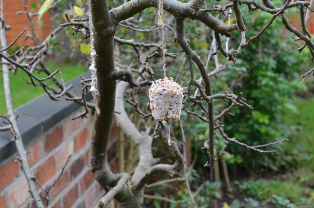 bird feeders eaten