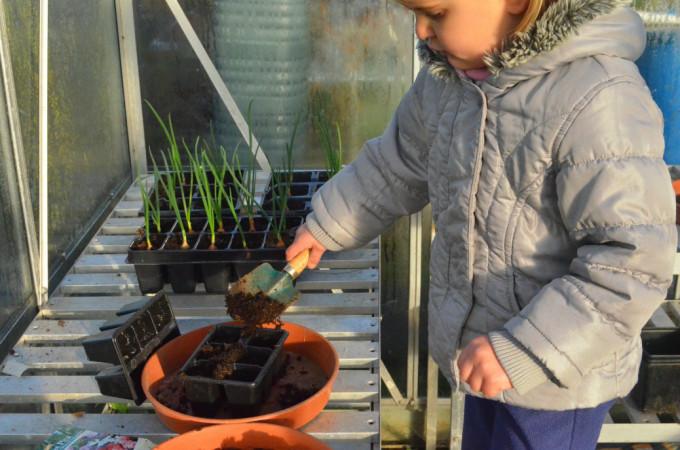 sweet pea planting