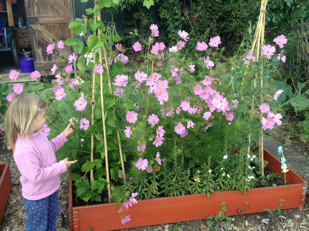 cosmos growing with kids