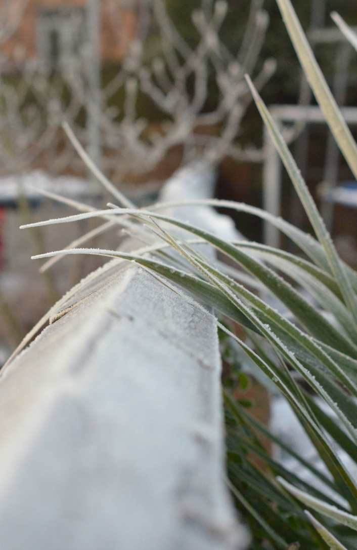 wall grass frost