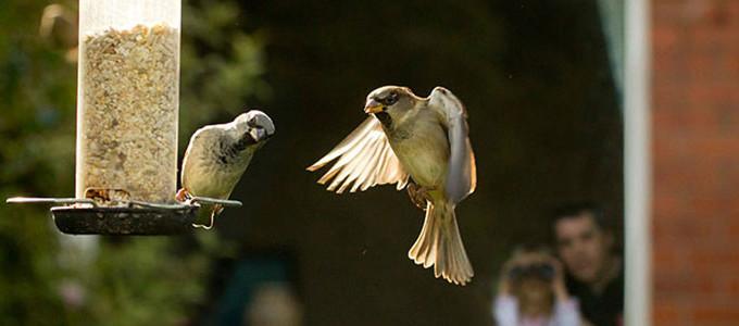 RSPB Big Garden Birdwatch 2015