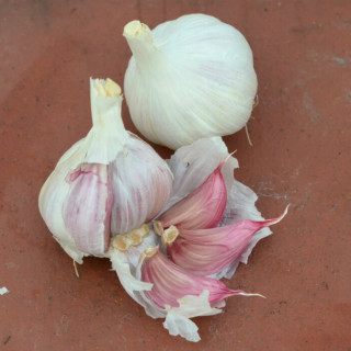 what to plant in january garlic