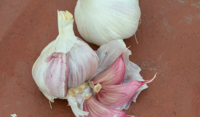 How to plant garlic