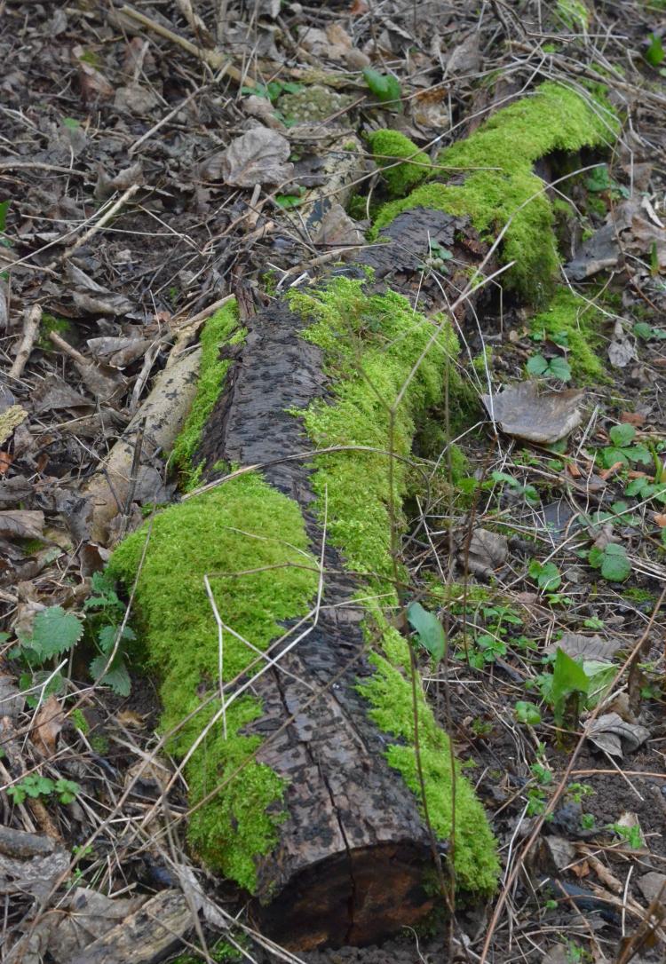 sharphill mossy log4