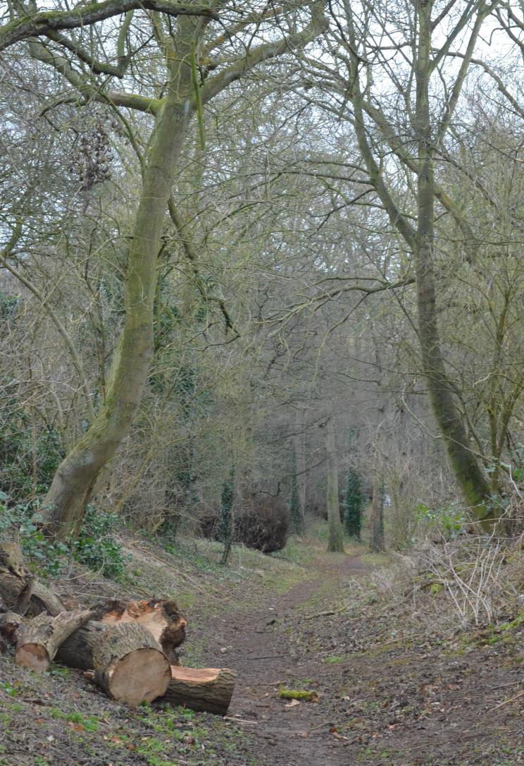 sharphill trees