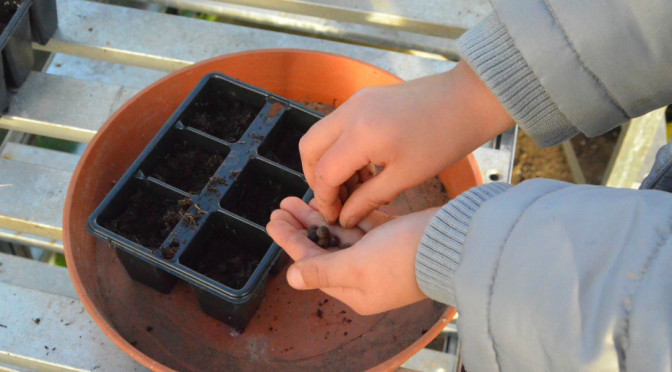 Essential kit for growing from seed