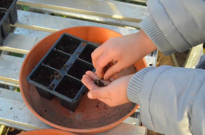 Essential seed growing kit