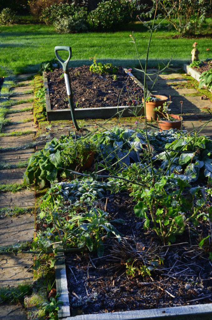 quick gardening in january - tidying up raised beds