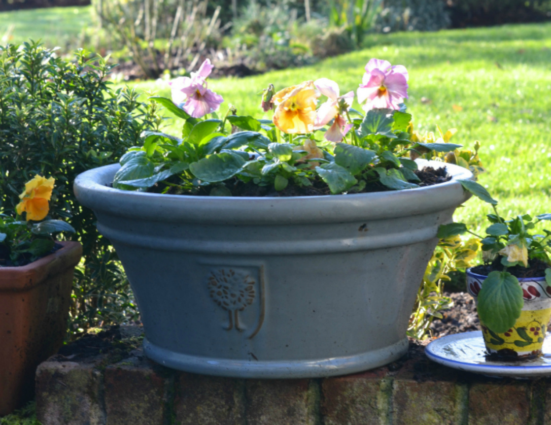 autumn gardening - raise pots like this winter pansy container off the ground