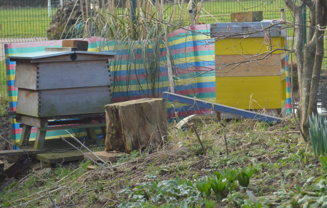 community garden beehives