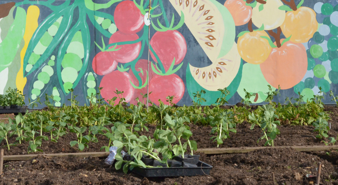 How Does Your Community Garden Grow Growing Family