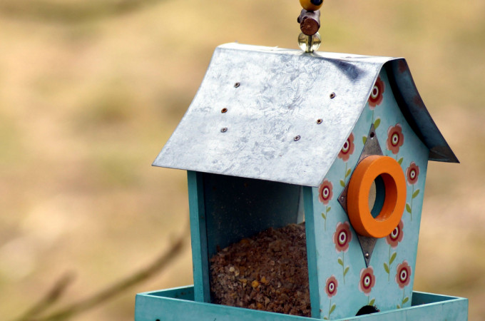 How to make your garden a home for wildlife