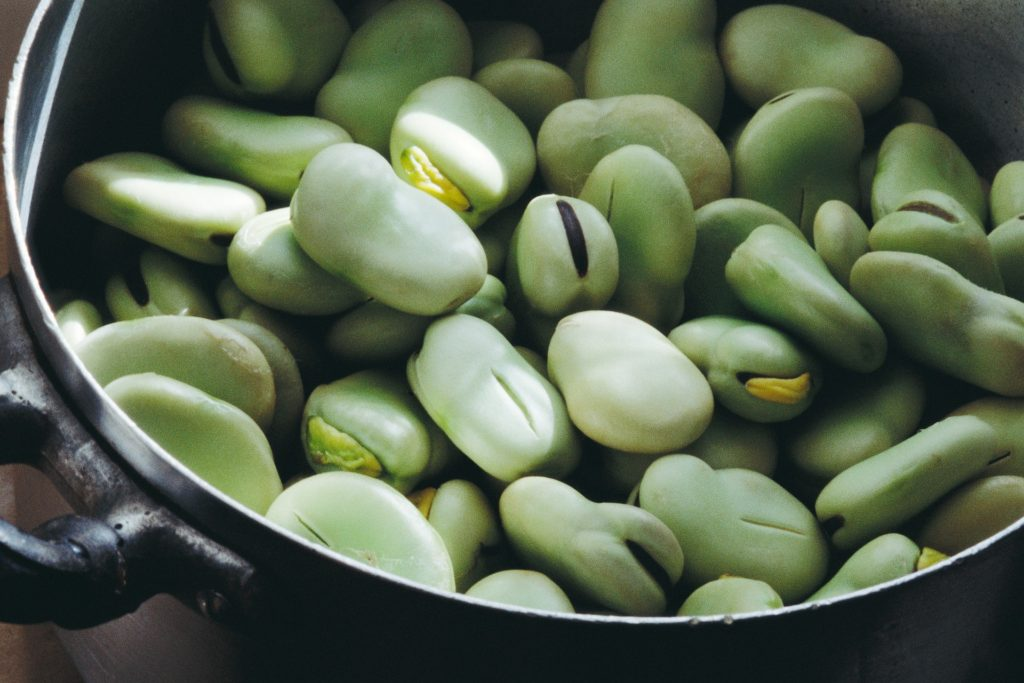 what to plant in february broad beans