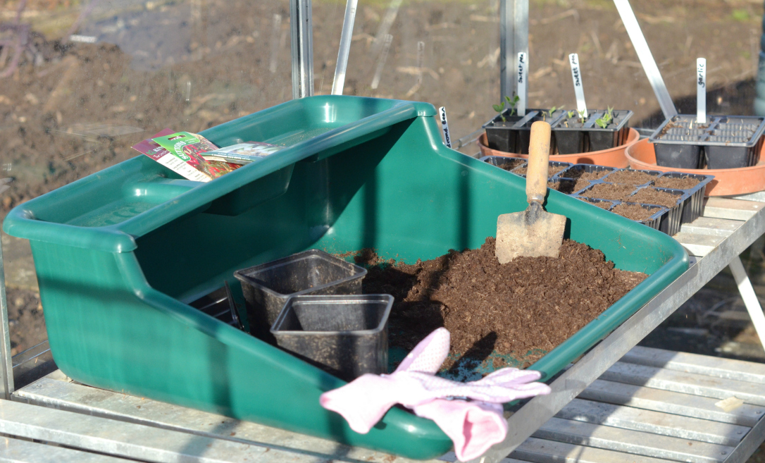 greenhouse seed sowing