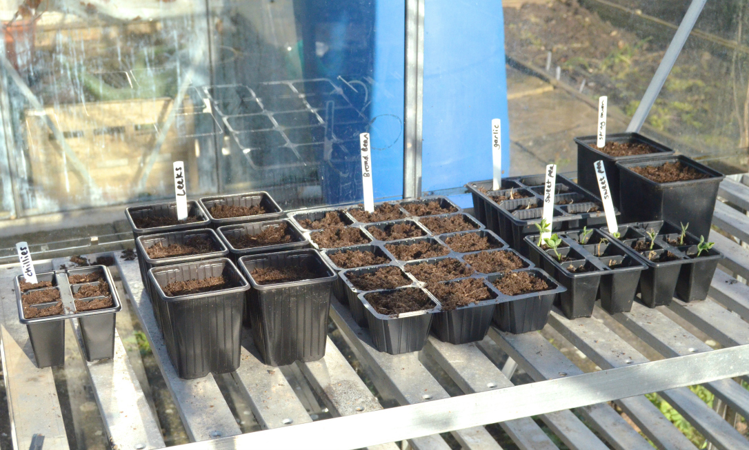 february greenhouse planting