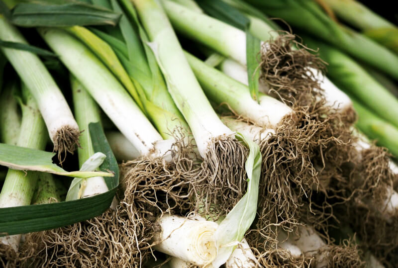 what to plant in february leeks