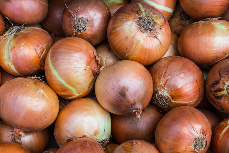 what vegetables to plant in february onions
