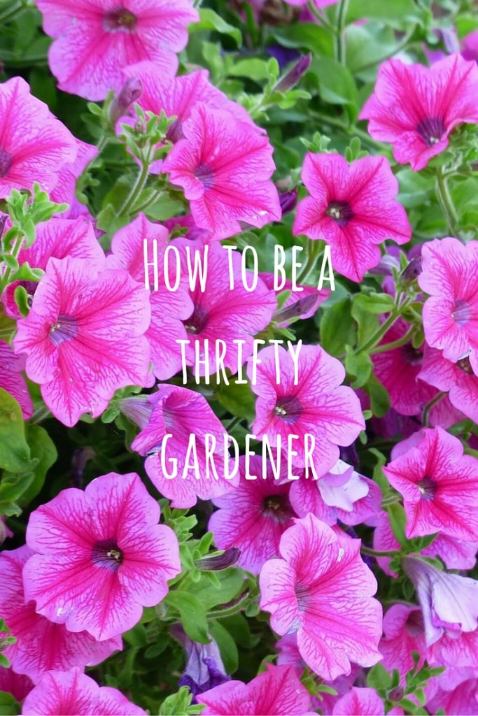 how to be a thrifty gardener