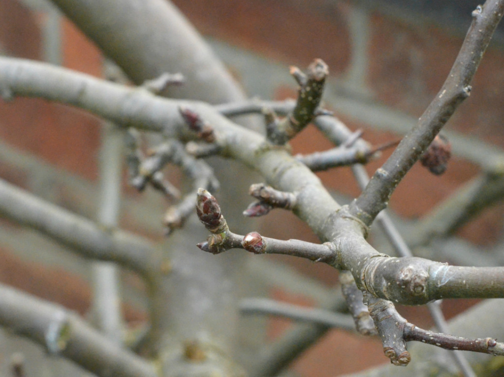 what to plant in november - bare root trees