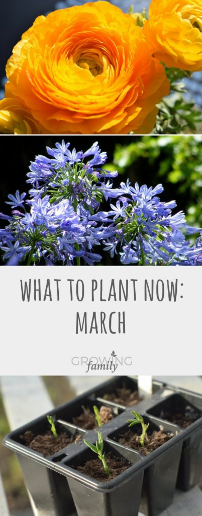 Ready to get planting in the garden? Check out my top picks for flowers and vegetables you can plant in March and get a head start on the gardening year!
