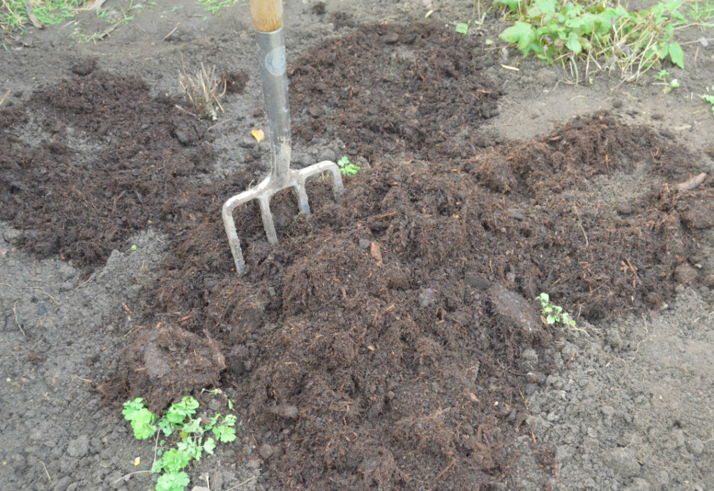 gardening in march - adding manure to soil