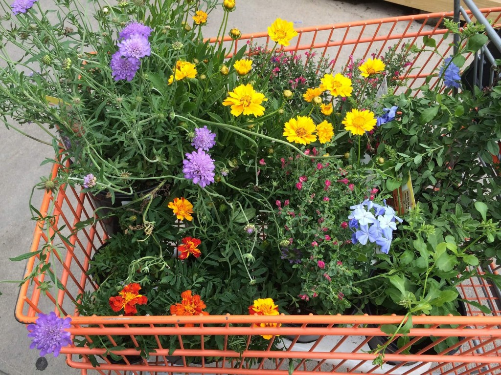 thrifty gardening tips too help avoid buying too many plants