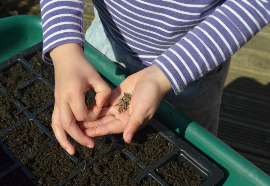 Kids sowing seeds