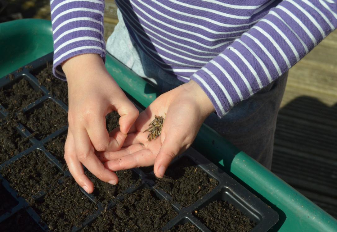 Kids seed sowing