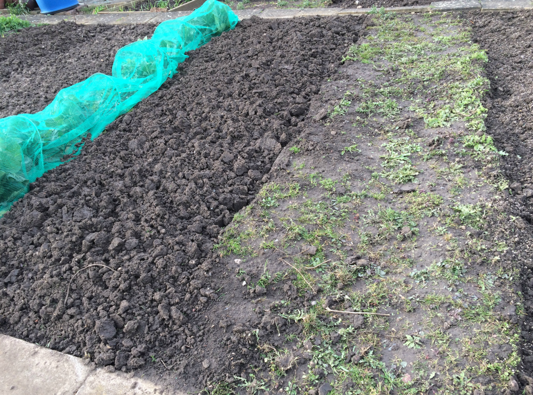 digging before and after