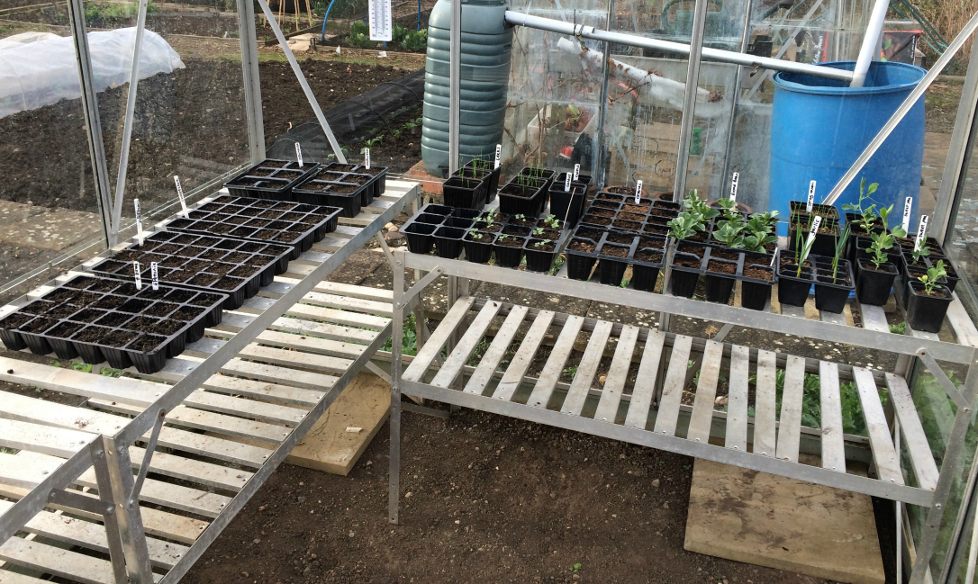 autumn gardening jobs - clear out the greenhouse