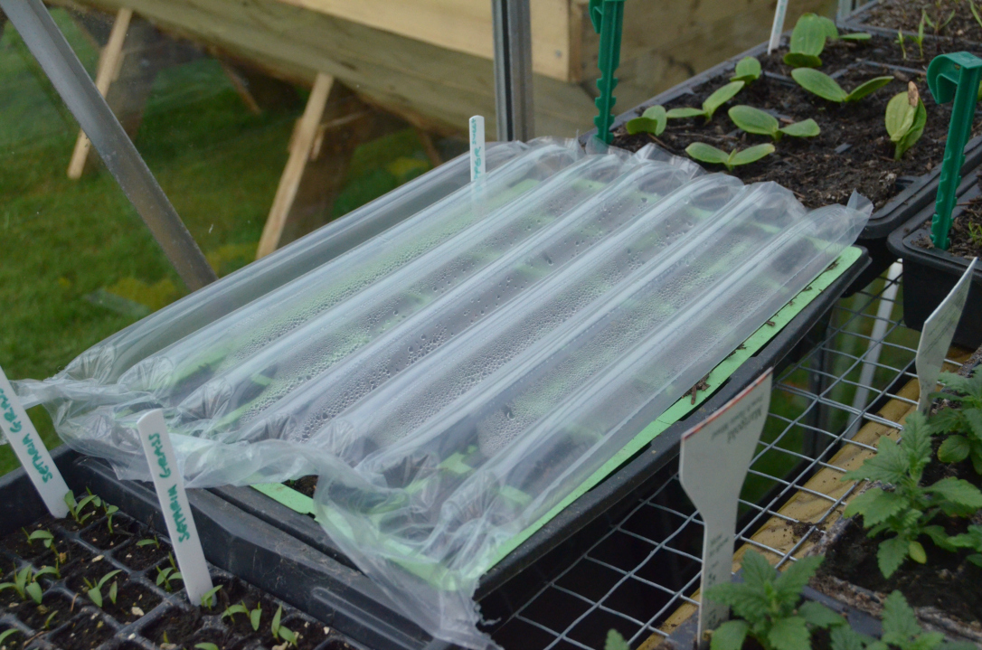 Packaging recycled as plant insulation