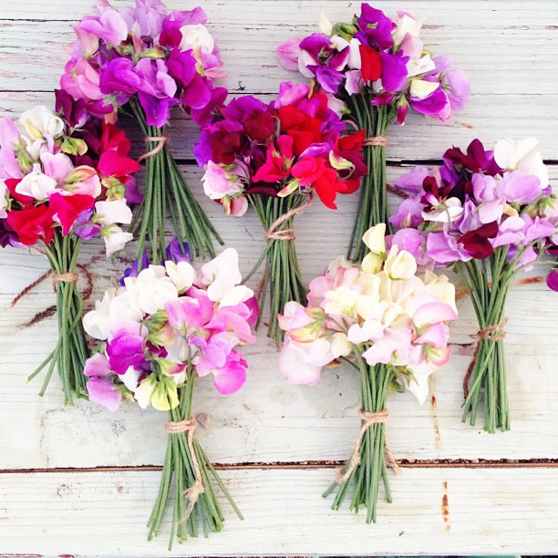April Birth Flowers Beautiful: Growing Family