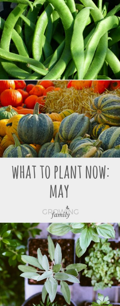 May is the first month of the year when the risk of frost dwindles, making it the ideal time to plant lots of less hardy crops. Here's what to plant in May.