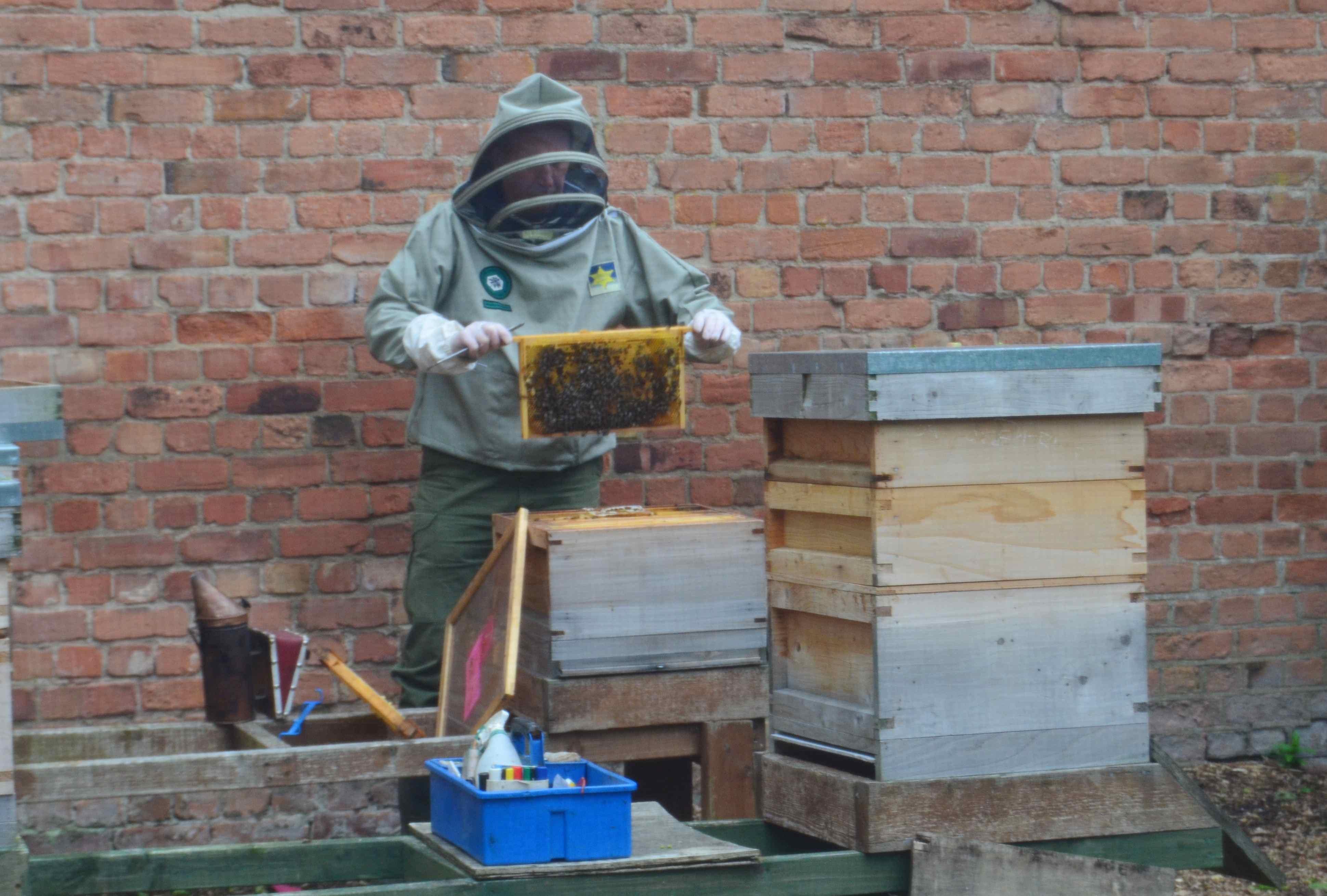 Nottingham in Bloom open day beehives