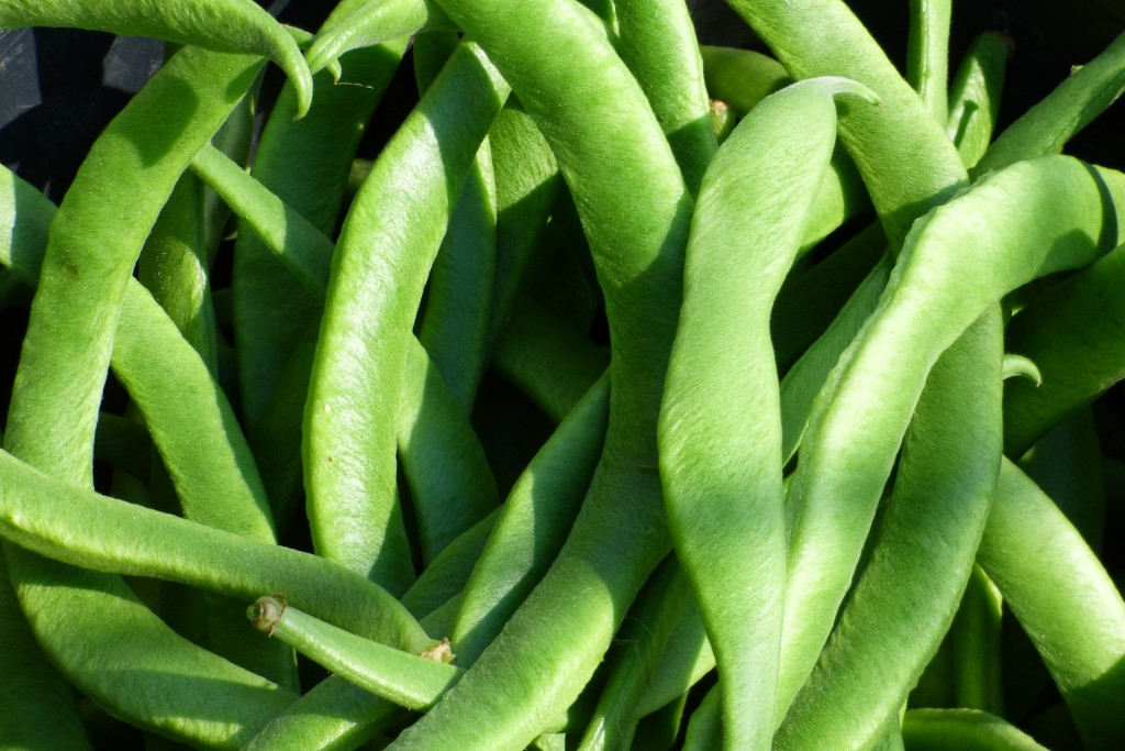 runner bean seeds can be planted in may
