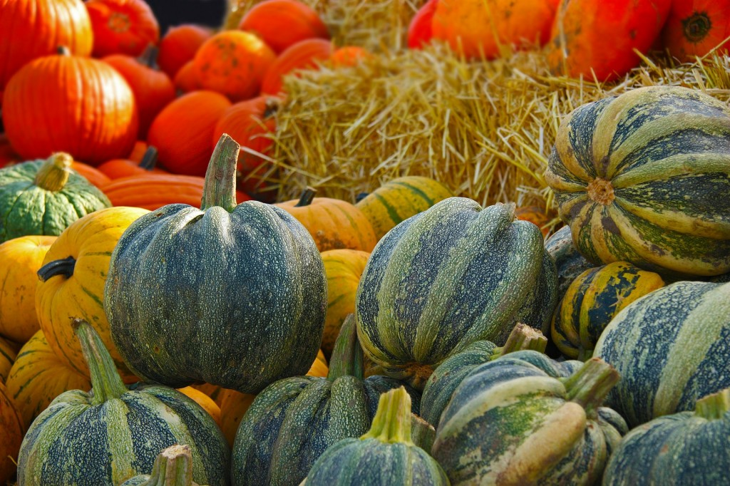 May is the perfect month to grow squash from seed