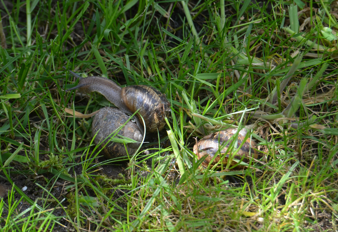 wildlife hunt snails