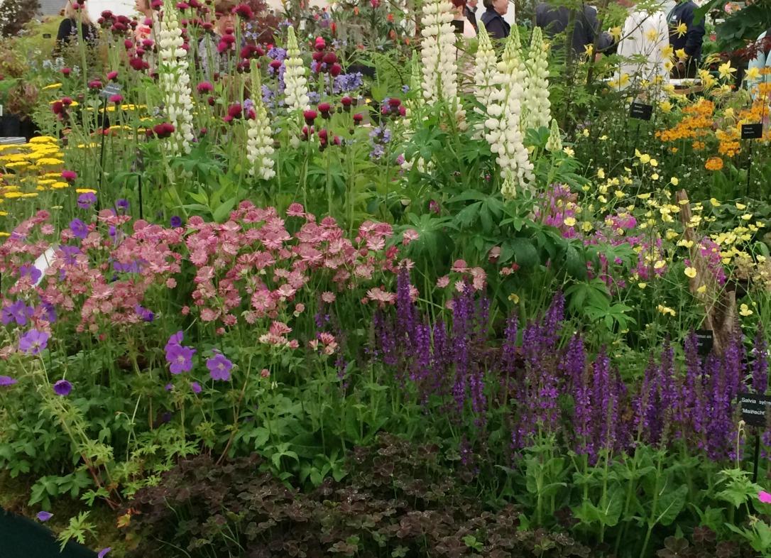 Gardeners World Live cottage planting