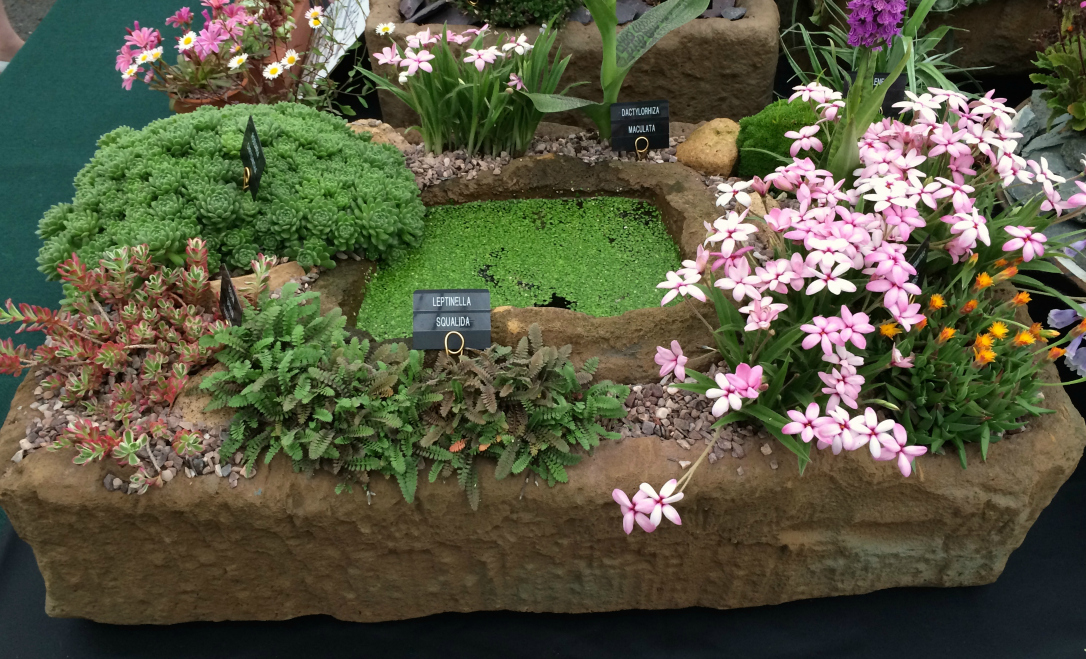 Gardeners World Live mini pond