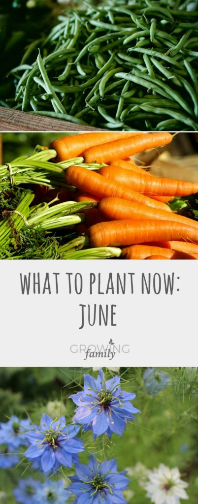 Summer may be upon us, but there are still plenty of vegetable crops and flowers to plant in June. Here are my top picks for what to plant now.