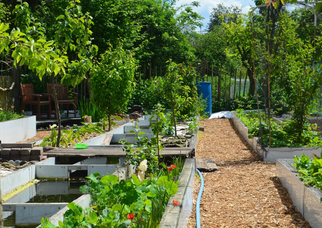 st anns allotments